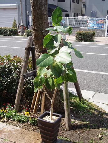 観葉植物 2