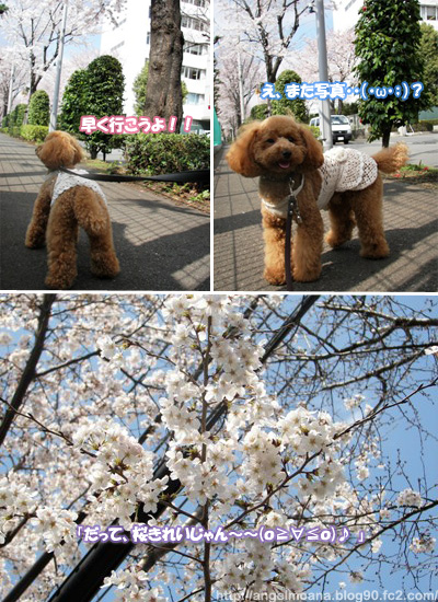 100_3323花見モアナブログ