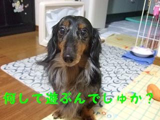 2007_00006.jpg
