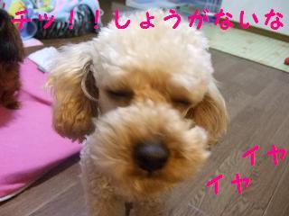 2007_0003.jpg