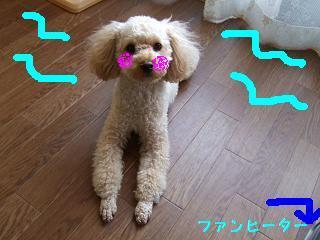 2007_01020019.jpg