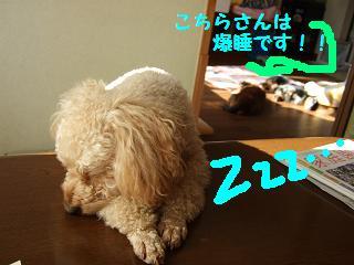 2007_01050017.jpg
