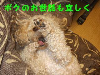 2007_01120001.jpg