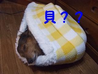 2007_02030003.jpg