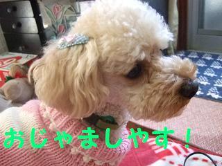 2007_02260001.jpg