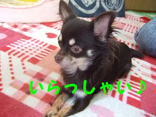2007_02260002.jpg