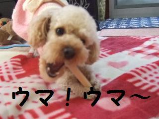 2007_02260005.jpg