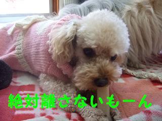 2007_02260008.jpg