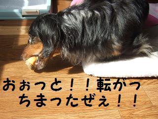 2007_03040007.jpg