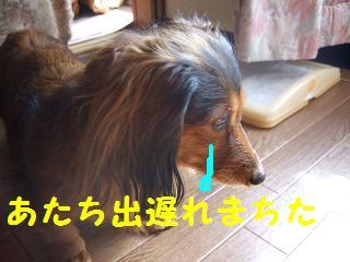 2007_03040008.jpg