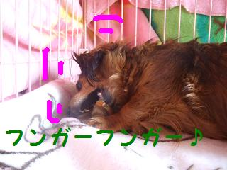 2007_03040010.jpg