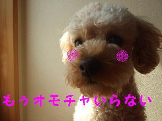 2007_03040014.jpg
