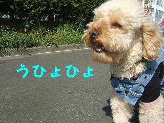 2007_04060003.jpg