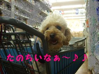 2007_04060010.jpg