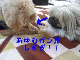 2007_04060017.jpg
