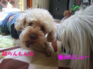 2007_04060019.jpg
