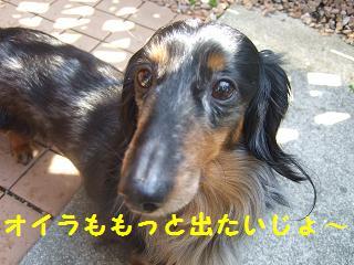 2007_04060023.jpg