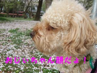 2007_04090015.jpg