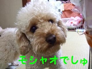 2007_04090023.jpg