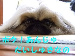 2007_04090029.jpg