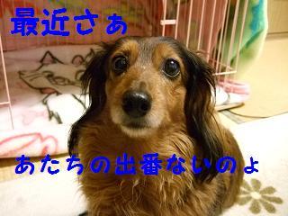 2007_04090030.jpg