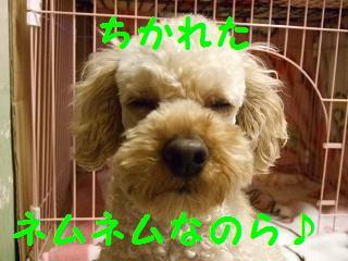2007_04090032.jpg