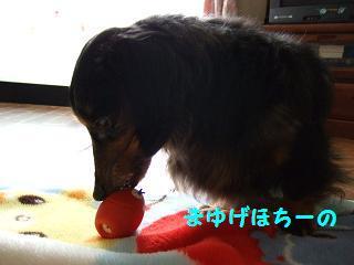2007_041.jpg