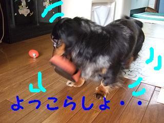 2007_04120004.jpg