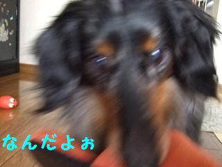 2007_04120007.jpg