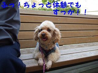 2007_04180012.jpg