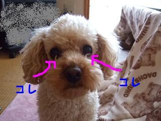 2007_04190004.jpg