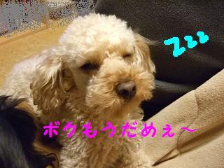 2007_04270006.jpg