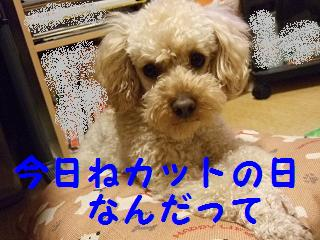 2007_05000.jpg