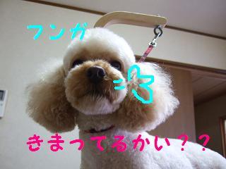 2007_05170005.jpg