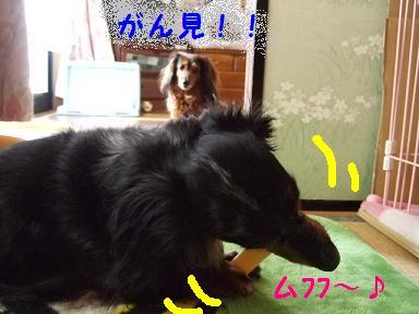 2007_06150008.jpg