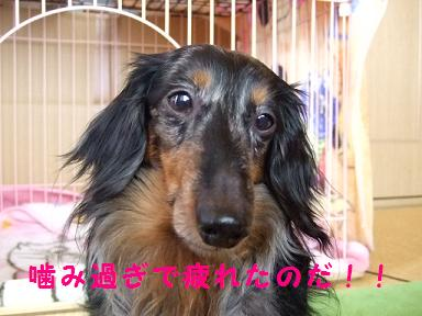 2007_06150012.jpg