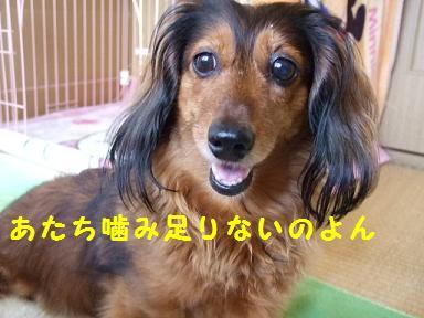 2007_06150013.jpg