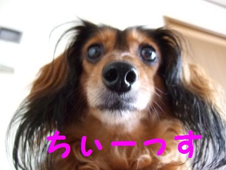 2007_08040004.jpg