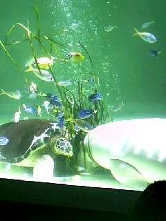 ジュゴン&ウミガメ
