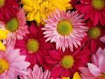 flowers-178542.jpg