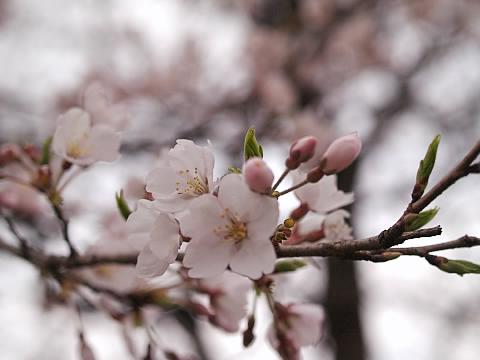 春の那須13.jpg