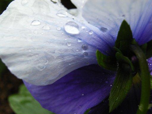 RainyTime75.jpg