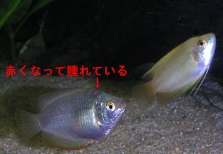 20051004_001