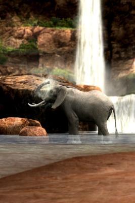 ゾウの水浴び2