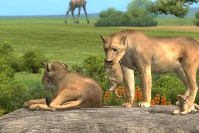 赤ちゃんライオン4