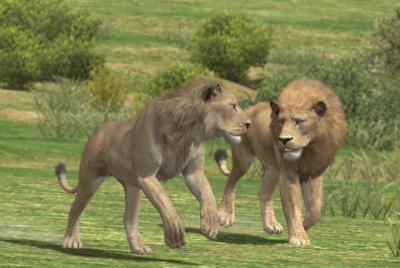 ライオン同士の戦い