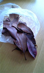 syoei落ち葉