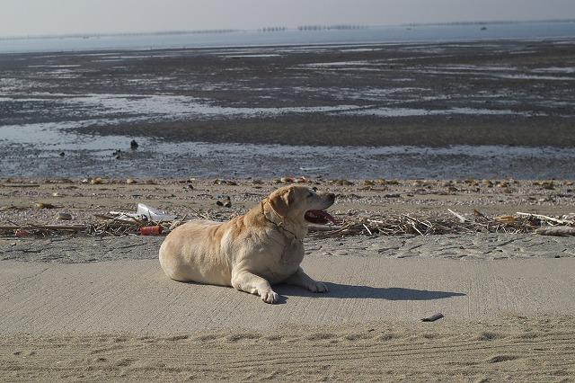 s-肥満犬1