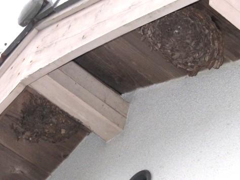 蜂の巣? 004