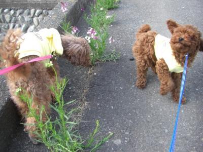 2008.3.27kureapo初お散歩 013blog